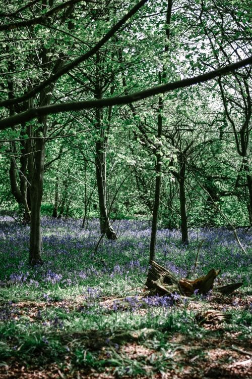 The Best Bluebell Woods In Derbyshire #slowtravel