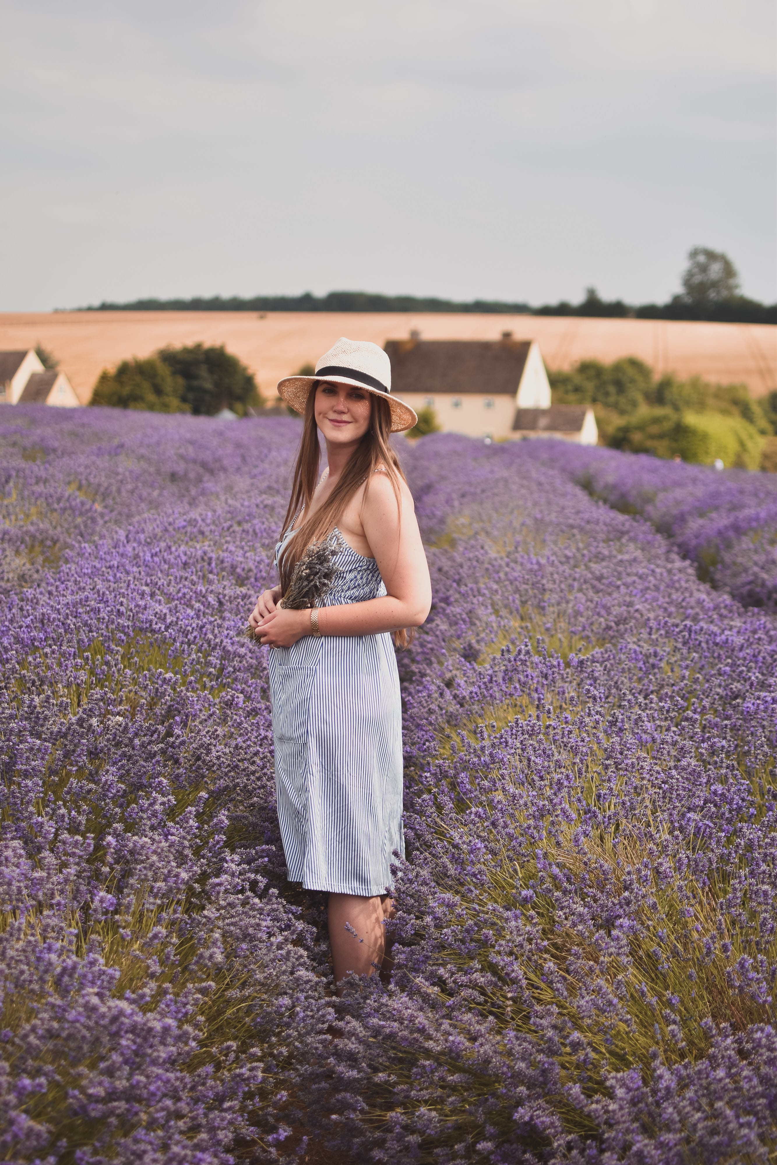 A Visit To Cotswold Lavender Field and Farm, England