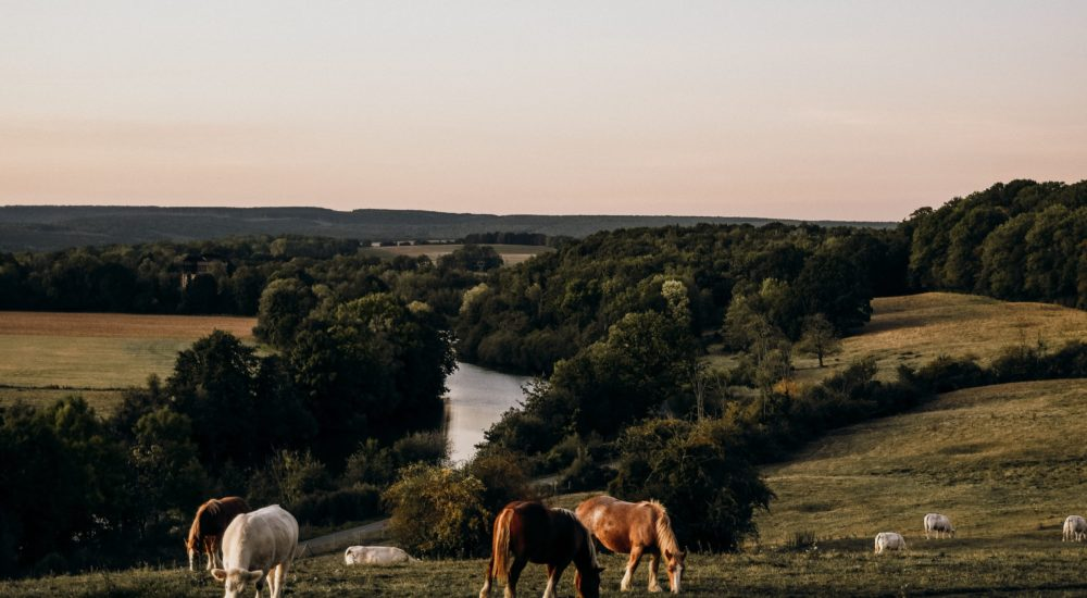 A Slow Travel Guide To The Ardennes, France